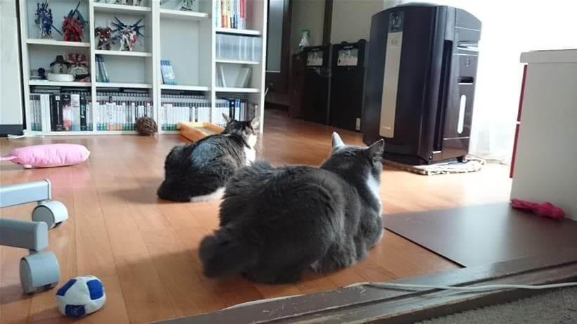 距離を保ちつつも一緒に居る愛猫たち
