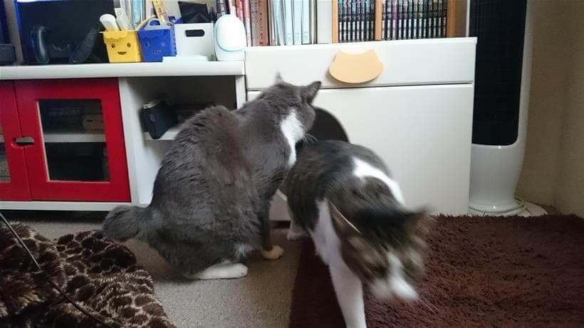 愛猫モコが寝床を奪いに来たと思って逃げる愛猫ミミ