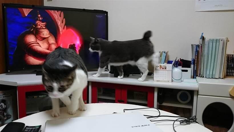 愛猫モコをかわしつつ上手いこと逃げる愛猫ミミ