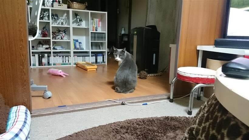 振り向いて飼い主を見つめる愛猫モコ
