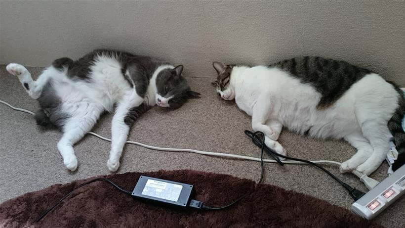 近くで寝ている愛猫たち①