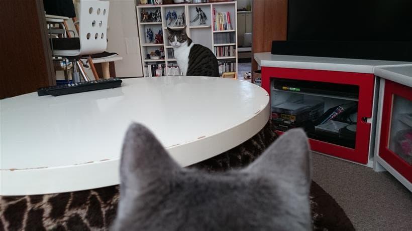 愛猫ミミを見つめる愛猫モコ(後頭部)