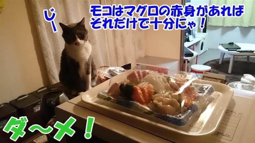 マグロの赤身を前にして好物だけで良いとワガママ言っている体の愛猫モコ