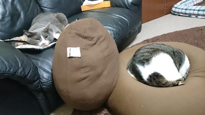 微妙に離れた位置で眠る愛猫たち