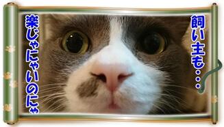 猫の事を考える飼い主も楽じゃないと思っている体の愛猫モコ(巻物Ver.)