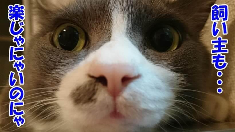 猫の事を考える飼い主も楽じゃないと思っている体の愛猫モコ