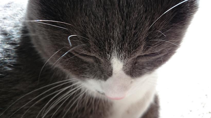 凹んでいるようにも見える愛猫モコ