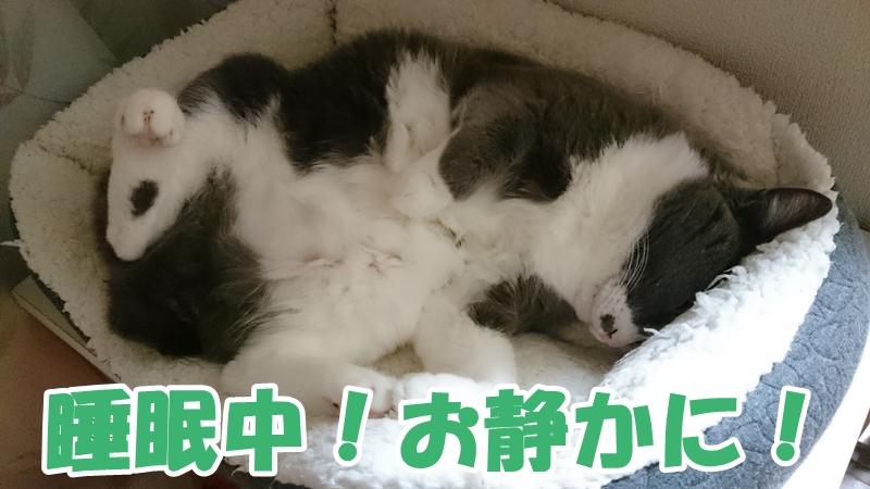 熟睡している愛猫モコ