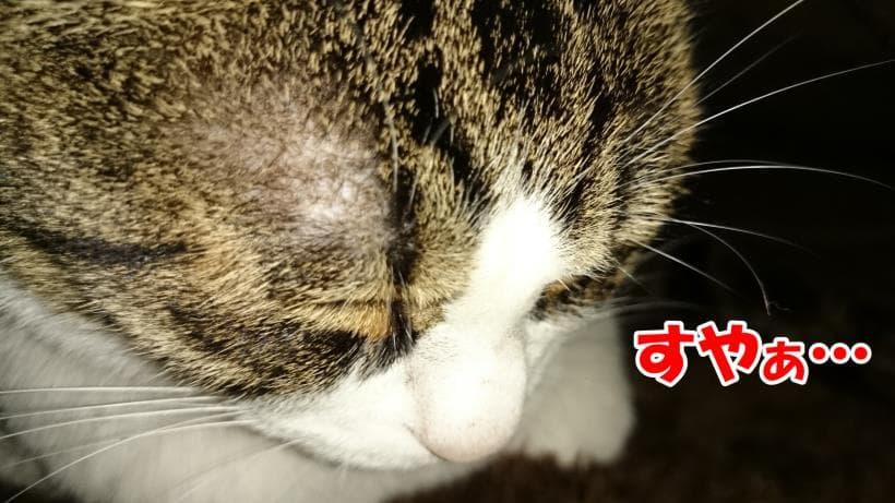 眠っている愛猫ミミのアップ