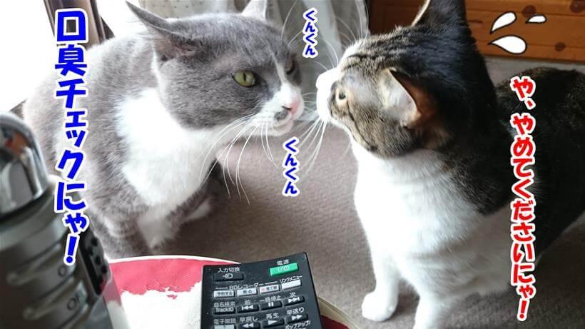 愛猫ミミの口臭をチェックする愛猫モコ