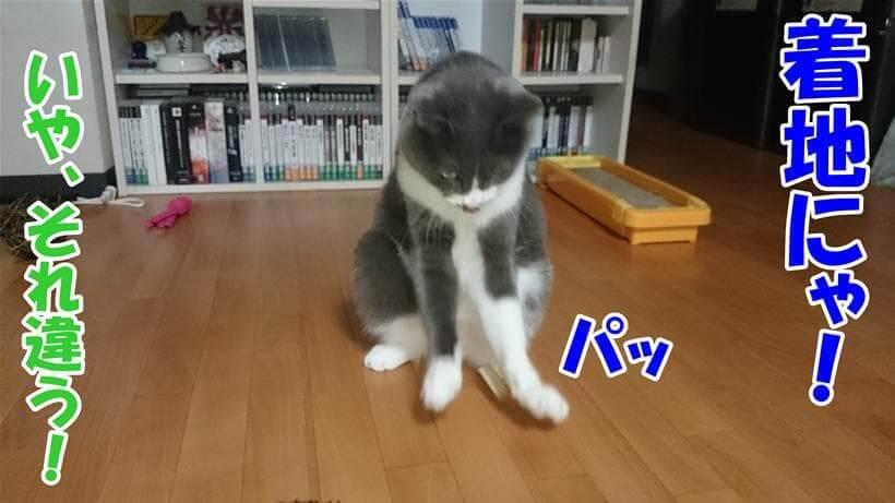 着地を表現してみた体の愛猫モコ