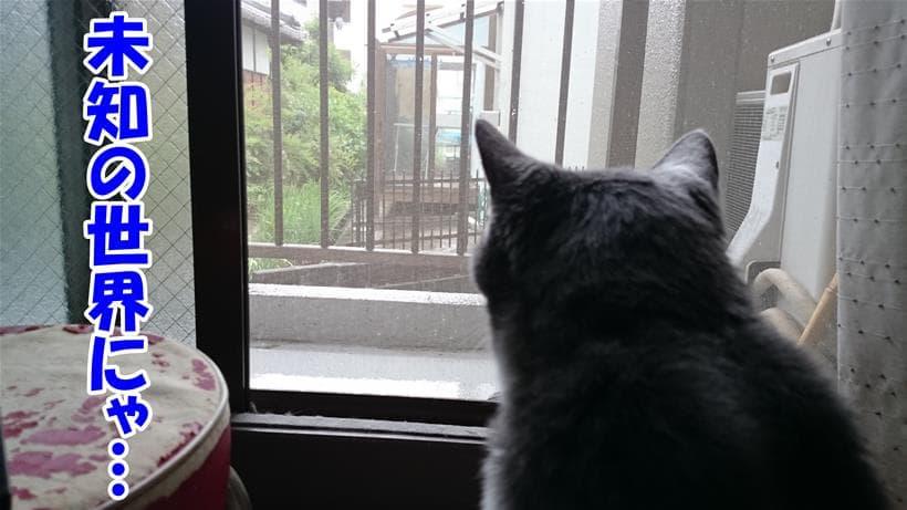 外に憧れを抱く体で外を眺める愛猫モコ