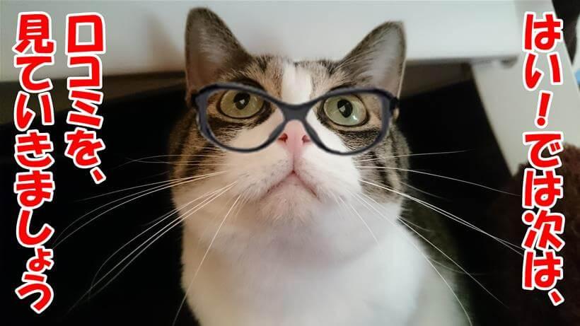 口コミを見ていきましょうと先生気取りな体の愛猫ミミ