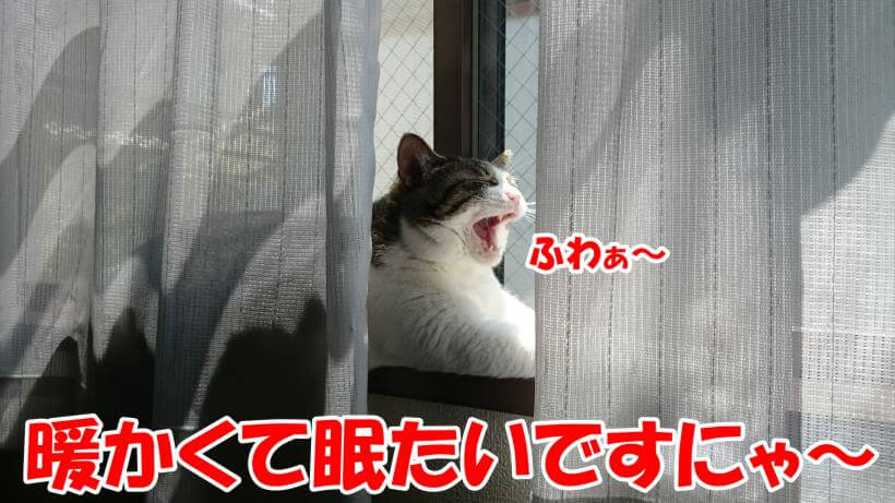 窓際であくびをする愛猫ミミ