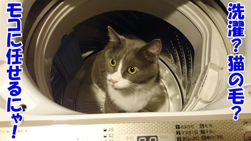 洗濯機の中に入っている愛猫モコ