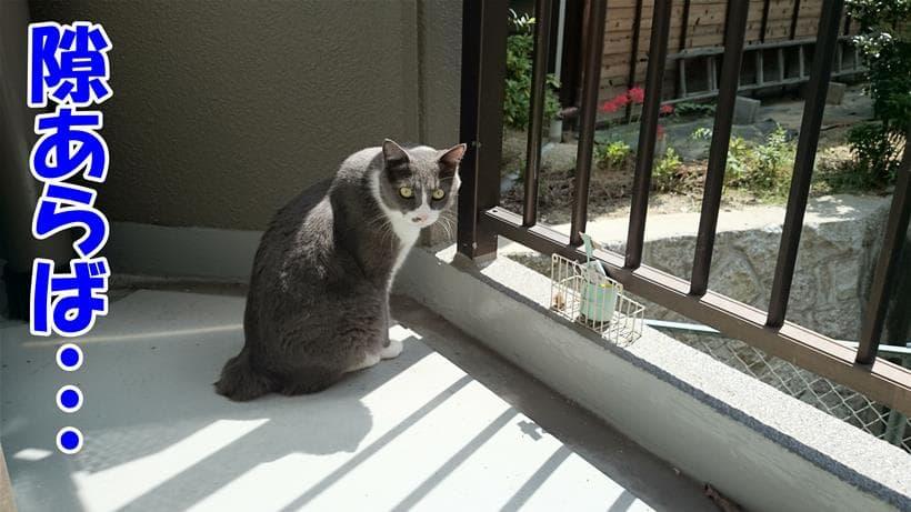 ベランダに出ている愛猫モコ
