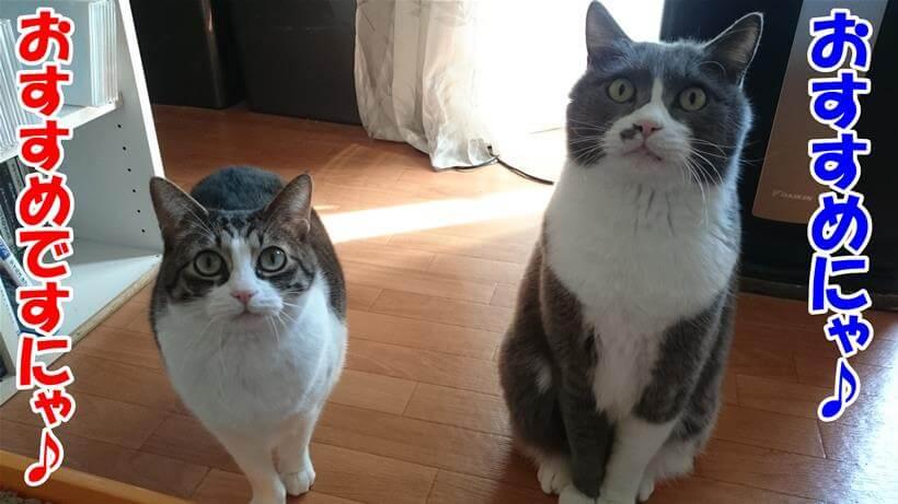 カリカリマシーンSPをおすすめしている体の愛猫たち