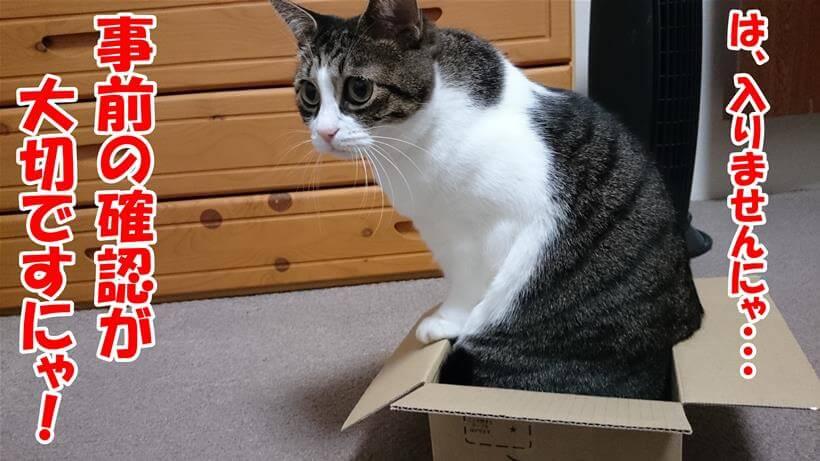 段ボールに入れず、事前の確認が必要だと述べている体の愛猫ミミ