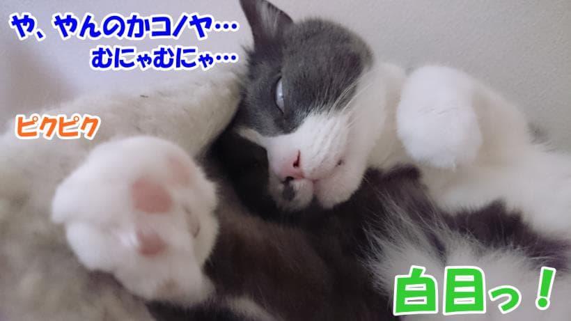 白目で寝言を言っている愛猫モコ