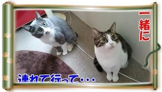 一緒に連れて行ってと懇願する体の愛猫たち(巻物Ver.)