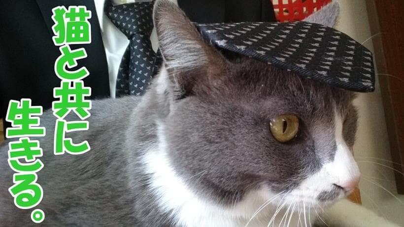 飼い主と愛猫モコ