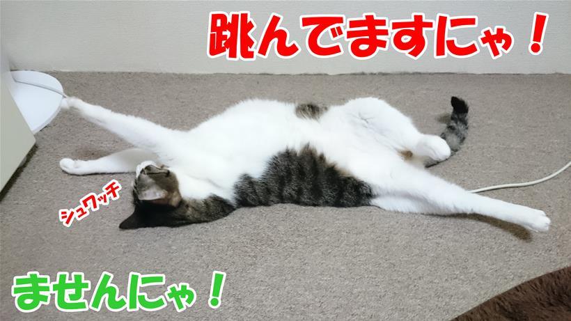飛んでいるような姿で寝ている愛猫ミミ
