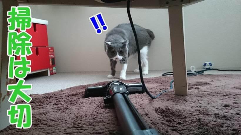 掃除機に警戒する愛猫モコ