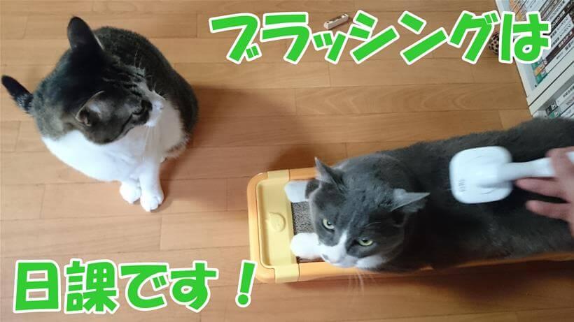 日課のブラッシングをしている愛猫モコと順番待ちの愛猫ミミ