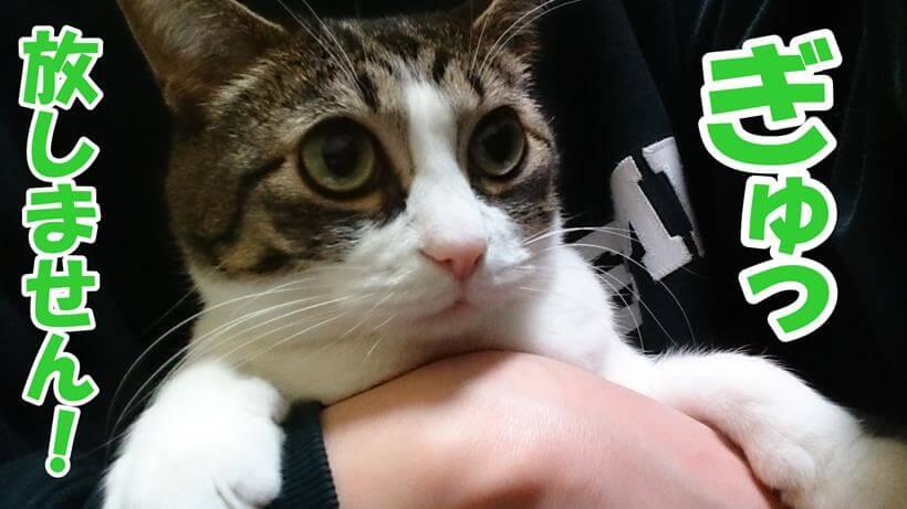 猫アレルギーでも猫を手放さない!と愛猫ミミを抱っこしている写真