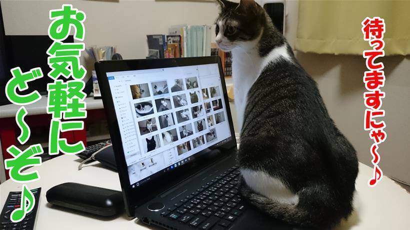 パソコンの上に乗ってお問い合わせを待っている体の愛猫ミミ
