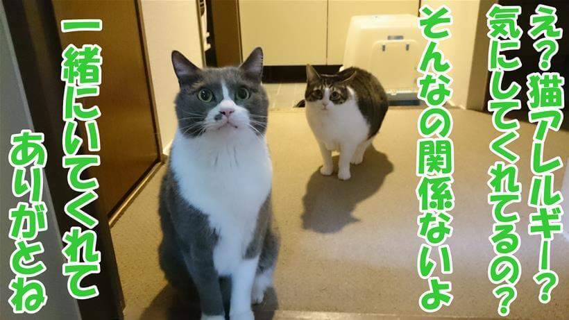 猫アレルギーの飼い主が心配する猫たちに感謝している体の写真