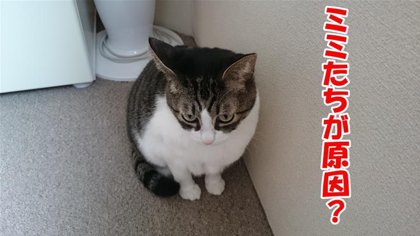 猫アレルギーは自分たちが原因なのかと心配する体の愛猫ミミ