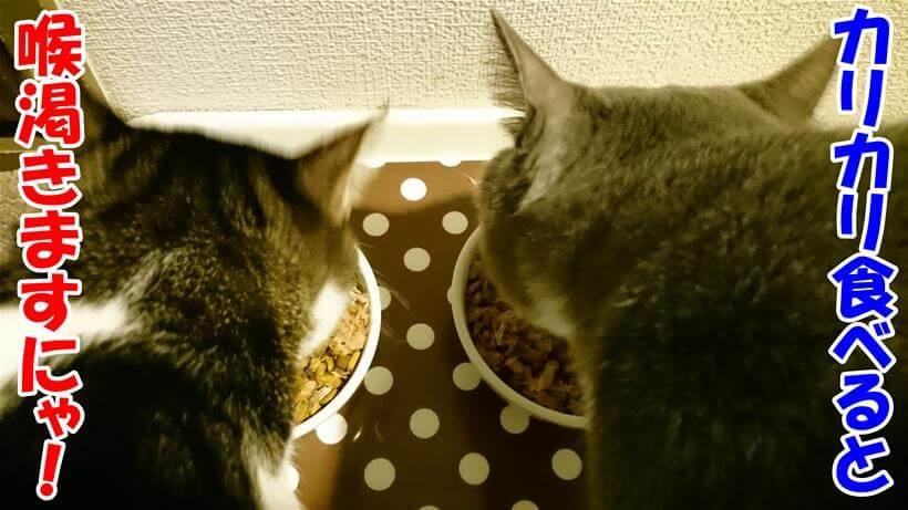 キャットフード(カリカリ)を食べる愛猫たち