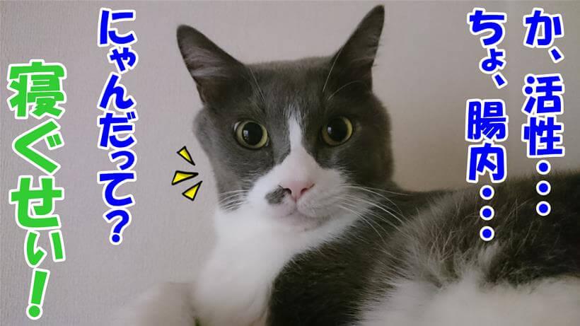 難しい言葉にたじろぐ体の寝起きの愛猫モコ