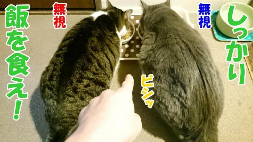 飼い主の言葉を無視している体でご飯を食べている愛猫たち