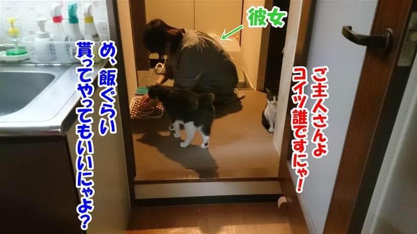 飼い主ではなく彼女に食事を準備してもらう愛猫たち