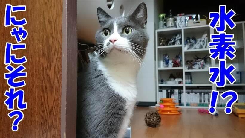 水素水とは何かを問うている体の愛猫モコ