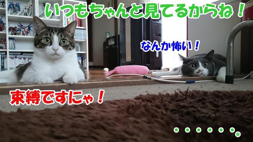 水を飲んでいるか確認すると言ったら束縛だの怖いだの冷めた目で見ている体の愛猫たち