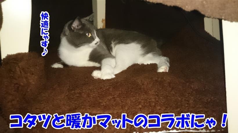 コタツと温かマットで快適に過ごしている愛猫モコ