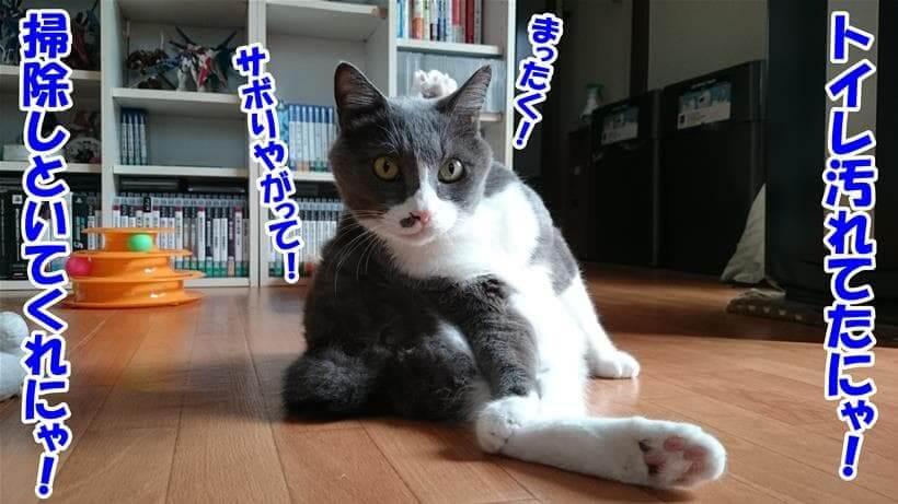 トイレが汚れていたと文句を言っている体の愛猫モコ