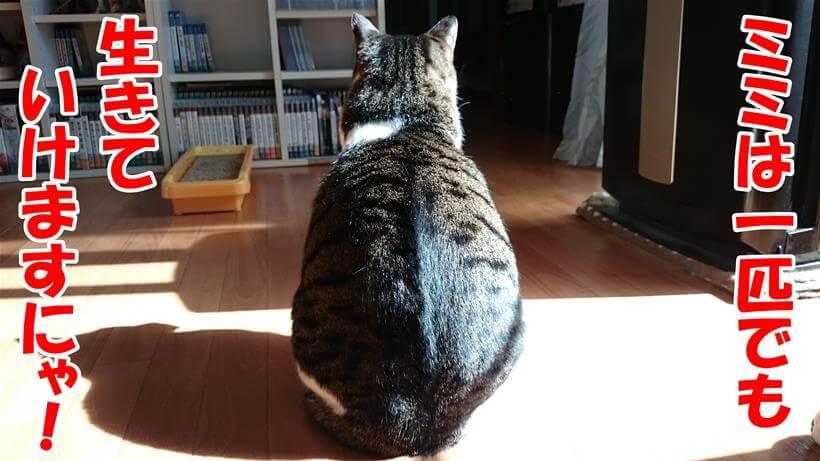 独りでも生きていけると言っている(背中で語る)体の愛猫ミミ