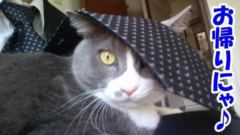 飼い主が帰宅直後に膝の上に乗る愛猫モコ