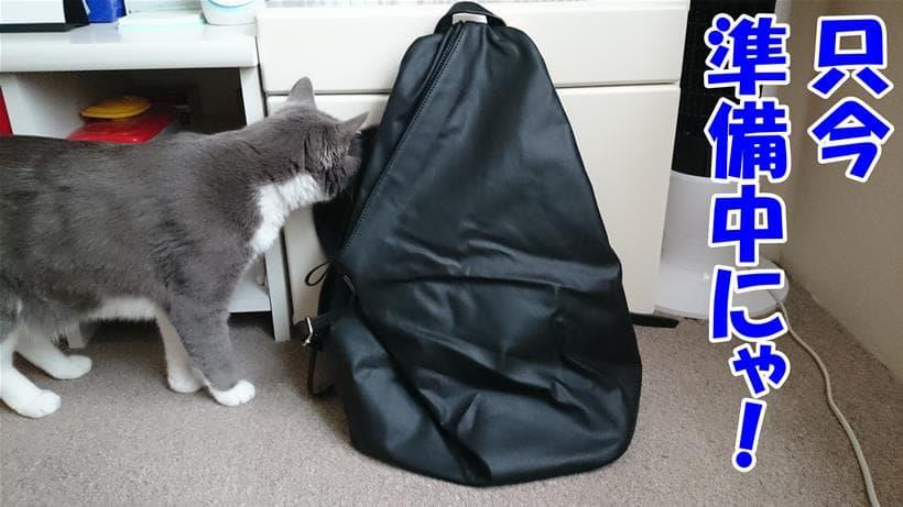 お出かけの準備をしている体の愛猫モコ