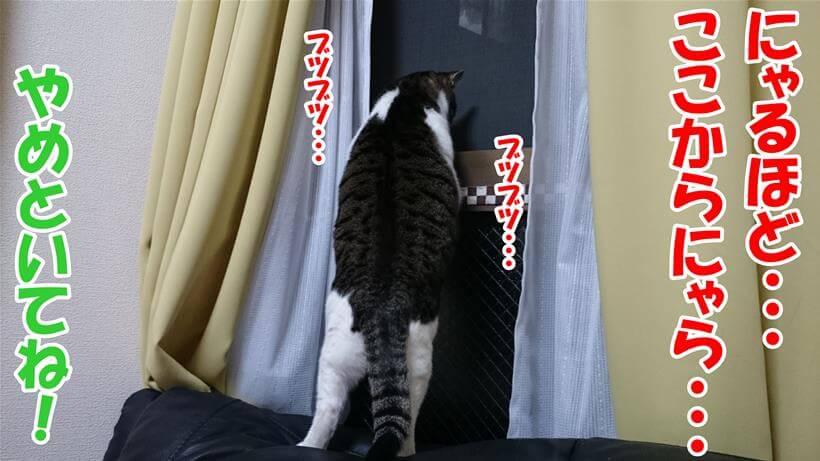 窓を覗いて脱走しようと画策する体の愛猫ミミ