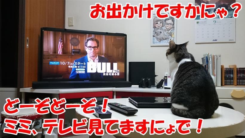 飼い主が出掛けるというのにテレビを見ている愛猫ミミ