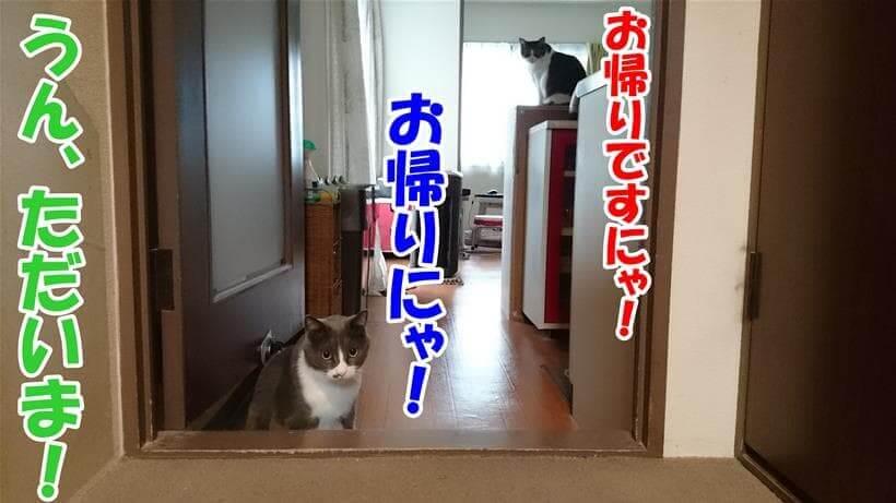お留守番していた愛猫たち