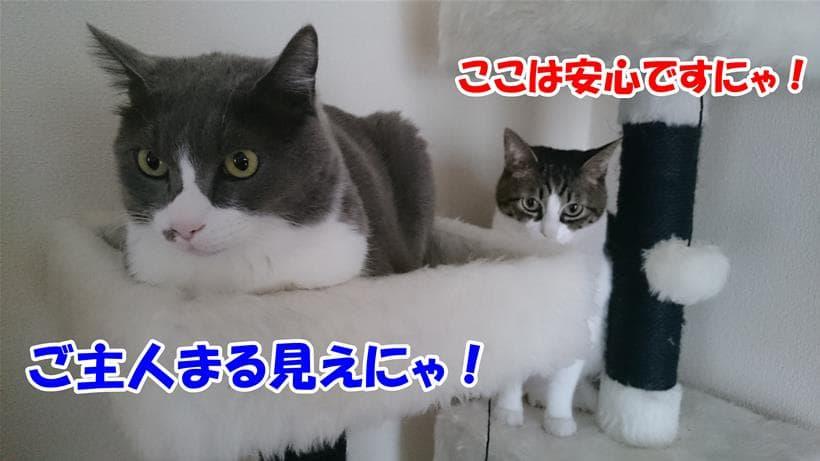 居心地の良いキャットタワーにたむろする愛猫たち