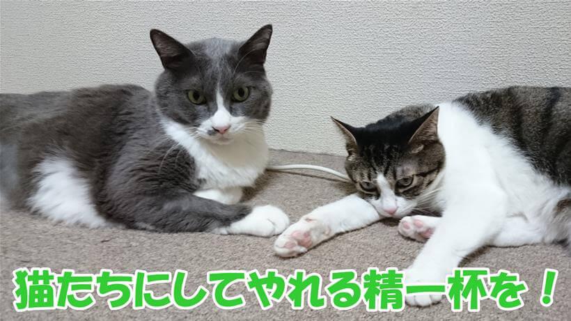 ストレスに弱い猫との長距離・長時間移動は猫たちにしてやれる精一杯の事を!