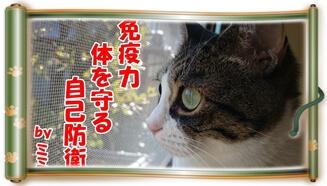 猫の免疫力