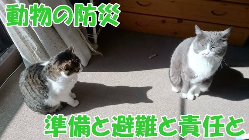 愛猫と防災、準備と避難と責任を!